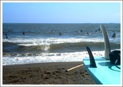 海にはショート・ロングたくさんいました