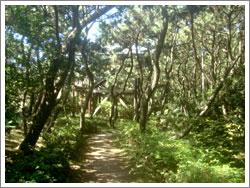 しおさいの森