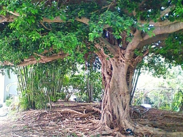 南国沖縄らしい鳥と植物。