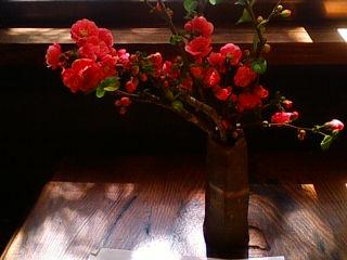 店内の木瓜の花
