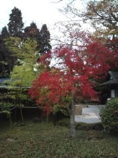 箱根ユネッサンの紅葉