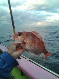真鯛釣りに行って来ます。