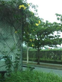 那覇空港ゆいレール高架下から。
