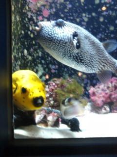 美ら海水族館、間に合いました。